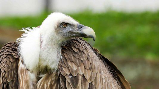 Vanishing Bird Of Prey