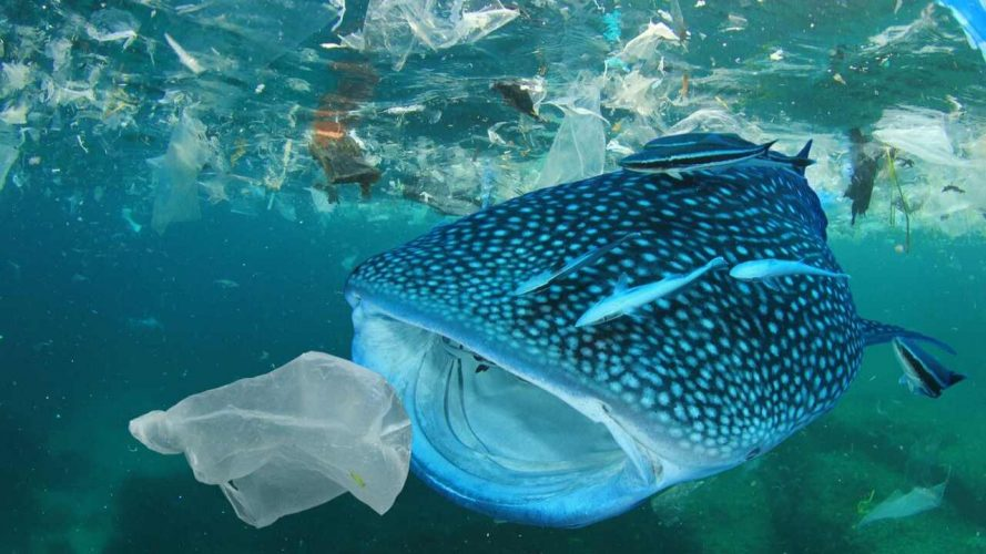 The Plastic In Our Oceans